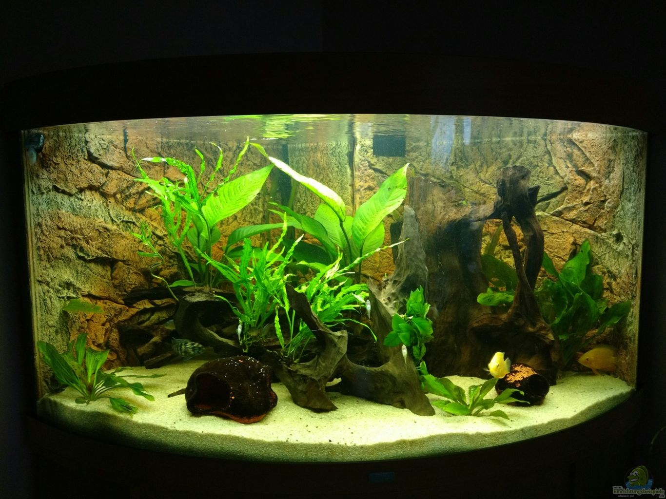 aquarium von 1887woeh mittel s damerika trigon 350. Black Bedroom Furniture Sets. Home Design Ideas