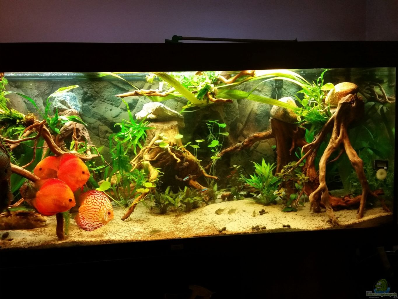 aquarium von podoma diskus wonderworld. Black Bedroom Furniture Sets. Home Design Ideas
