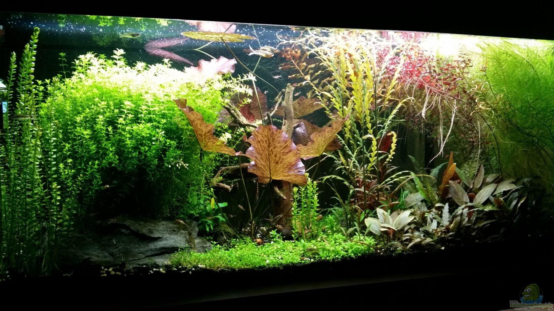 Aquarium von ichigo becken 32663 for Aquarium becken