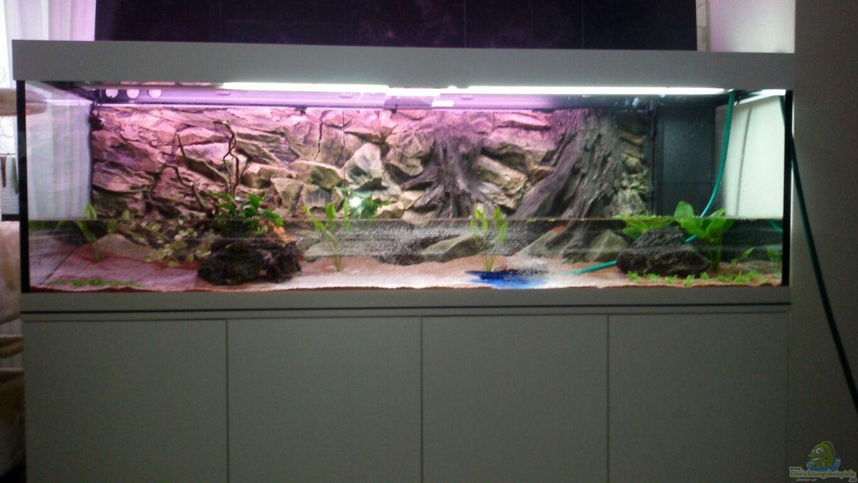 aquarium von discus s damerika traum. Black Bedroom Furniture Sets. Home Design Ideas