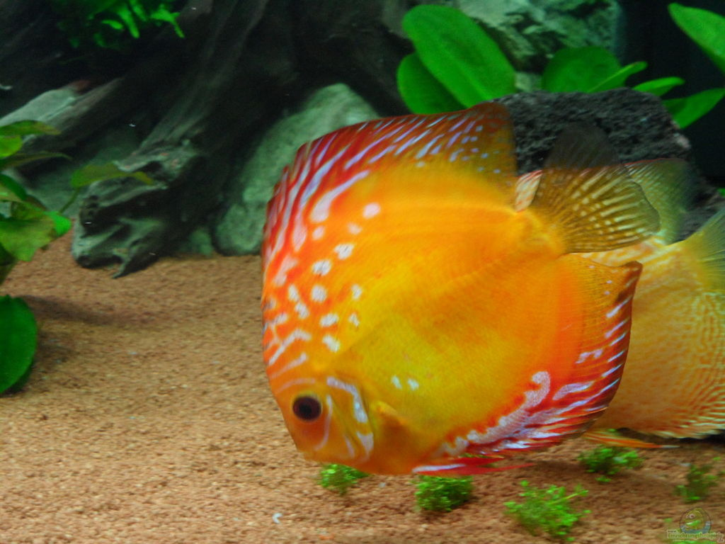 how to raise gh in aquarium