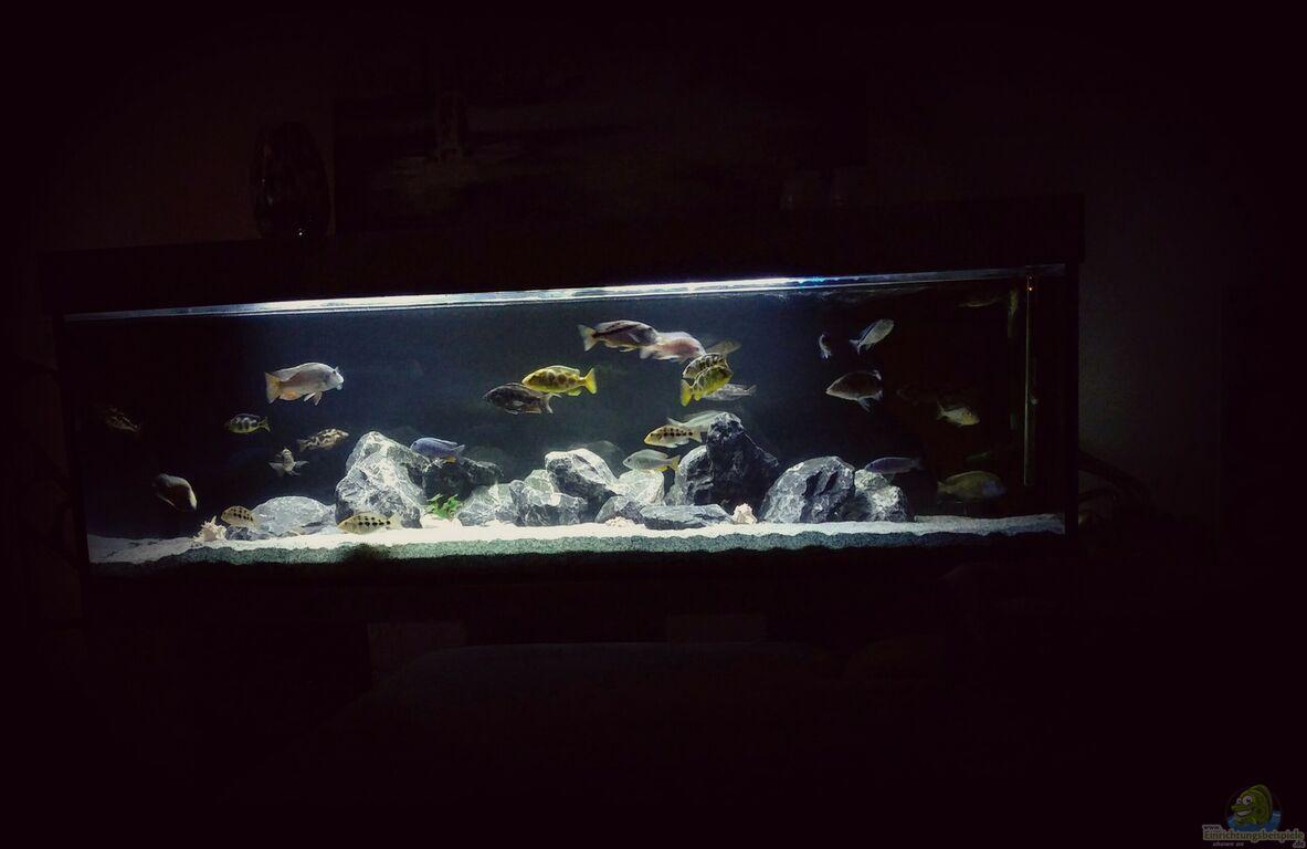 Aquarium von ella tinkerbella malawi nonmbunas for Aquarium abdeckung