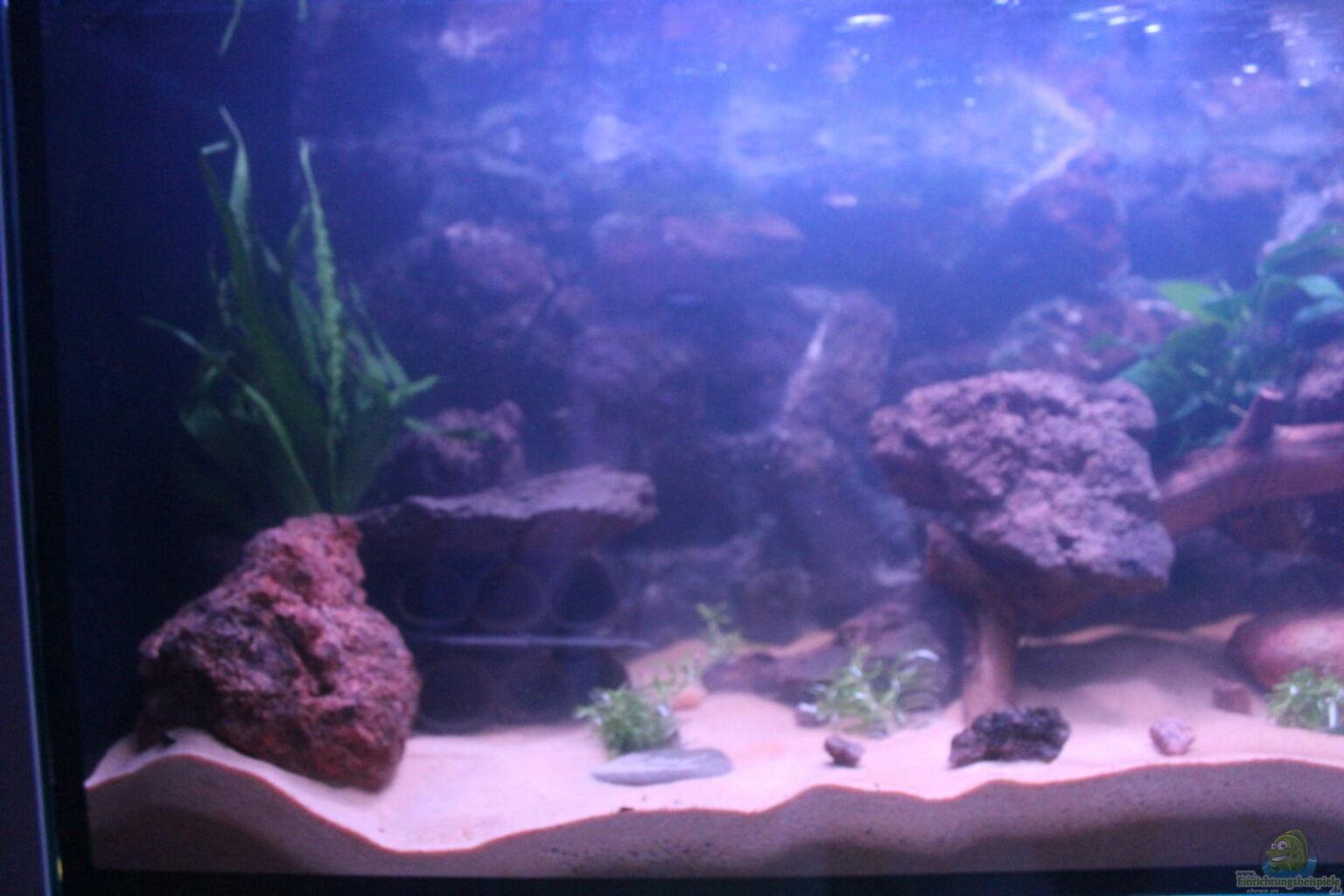 aquarium von maxheadroom panaqolus heaven. Black Bedroom Furniture Sets. Home Design Ideas