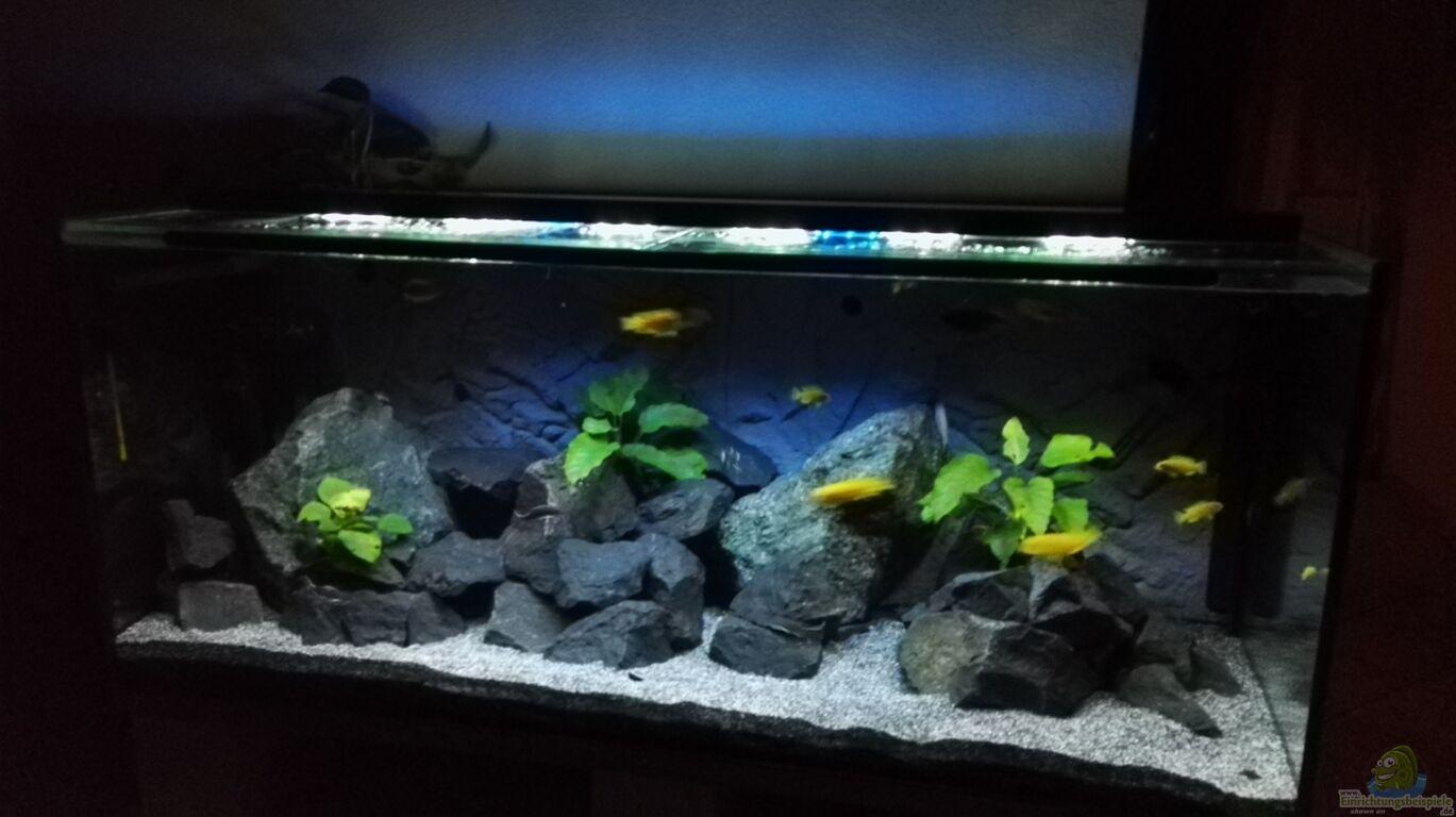 aquarium von guido studtrucker becken 32694. Black Bedroom Furniture Sets. Home Design Ideas