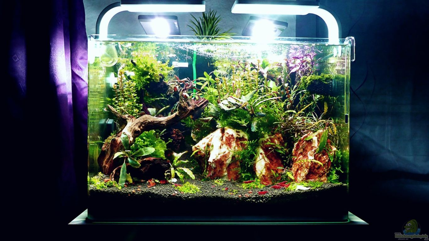 Aquarium von Scaper?s love Plants: Bucetank