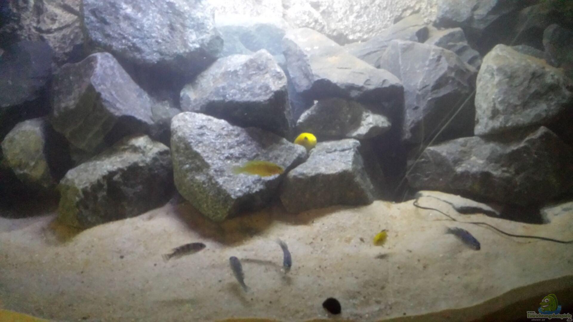 Aquarium von o conner becken 32731 for Aquarium becken