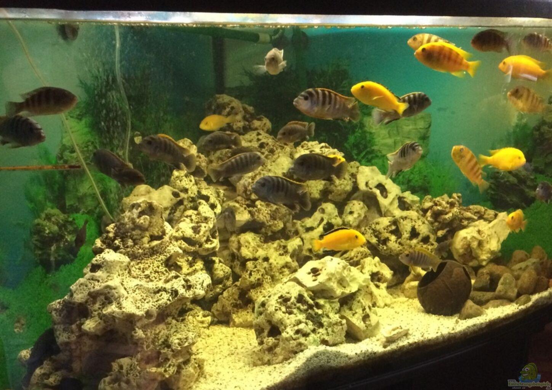 aquarium von seni becken 32769. Black Bedroom Furniture Sets. Home Design Ideas