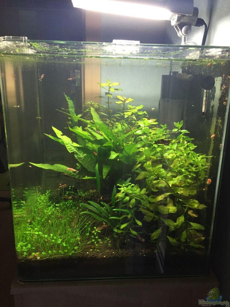 aquarium von dl garnelen cube einrichtungsbeispiele. Black Bedroom Furniture Sets. Home Design Ideas