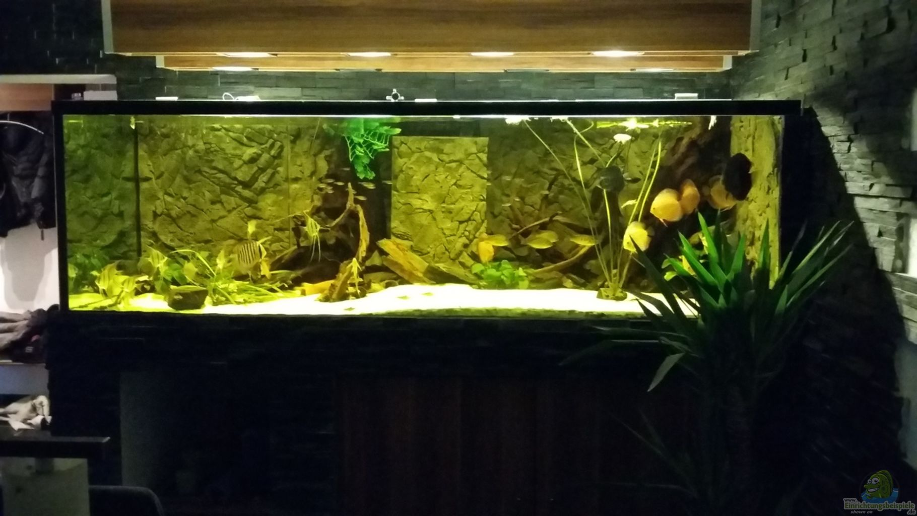Aquarium von T-Aquatics: Wohnzimmer Uferzone