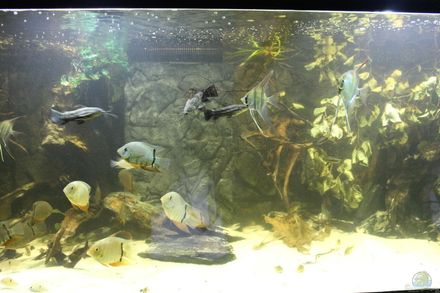 Besatz im aquarium wohnzimmer uferzone aus wohnzimmer uferzone von t aquatics - Aquarium wohnzimmer ...