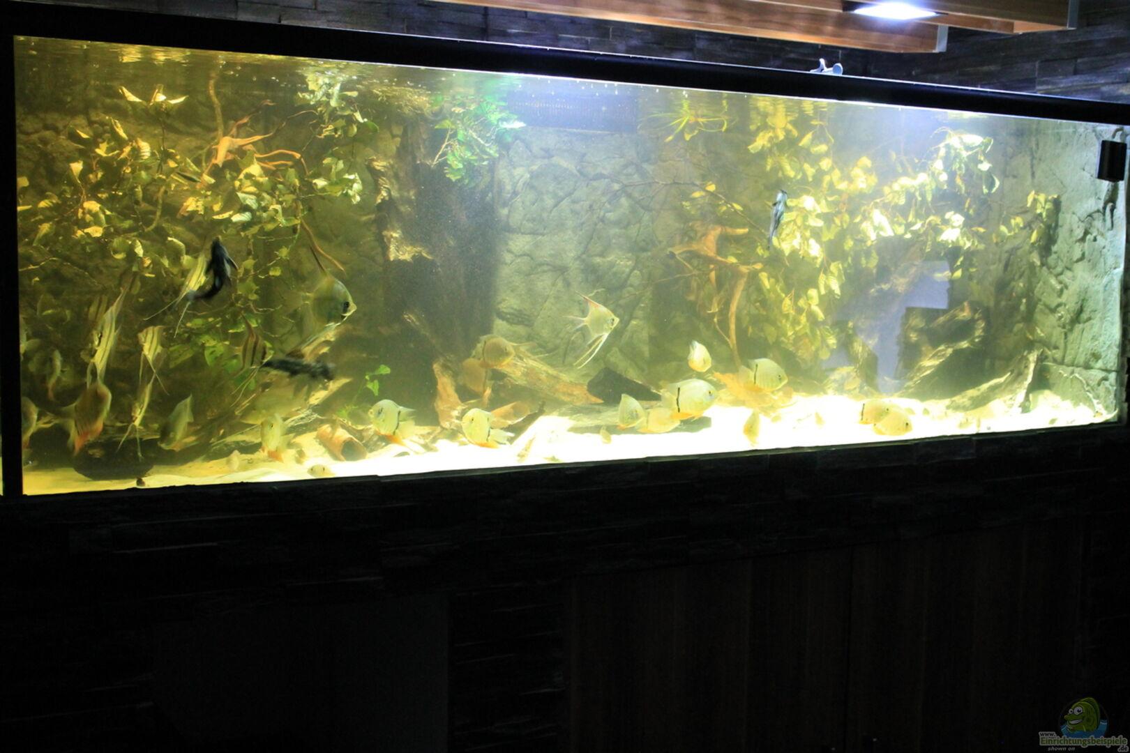 Aquarium von T-Aquatics (32815): Wohnzimmer Uferzone
