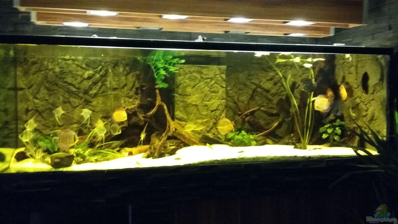 Aquarium Dekoideen Wohnzimmer Wanddeko Glas Telle