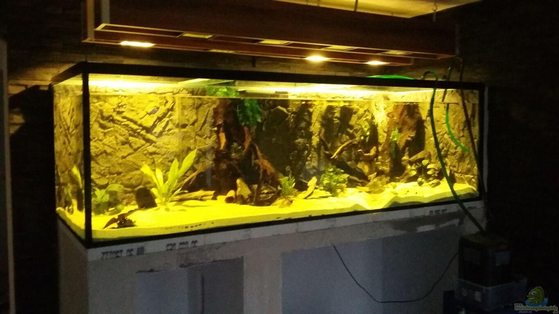 Aquarium Dekoideen Wohnzimmer Wanddeko Glas Teller