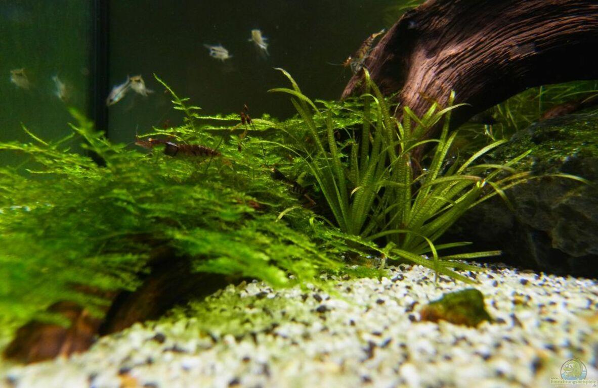 aquarium von yoshi maus die minis. Black Bedroom Furniture Sets. Home Design Ideas