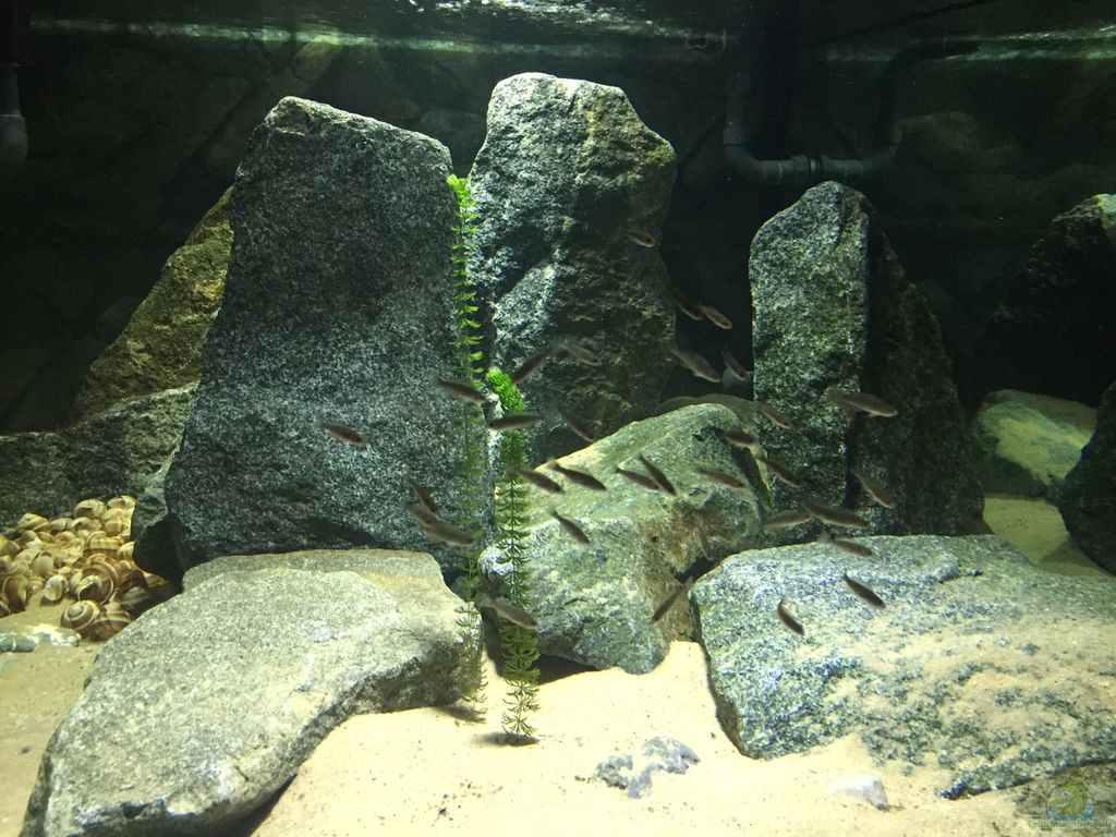 aquarium von monaco tanganjika fels sand. Black Bedroom Furniture Sets. Home Design Ideas