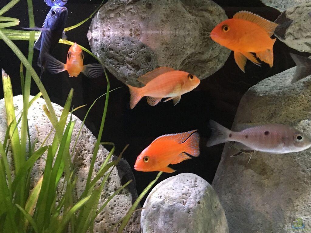 aquarium von malawihude malawihude. Black Bedroom Furniture Sets. Home Design Ideas