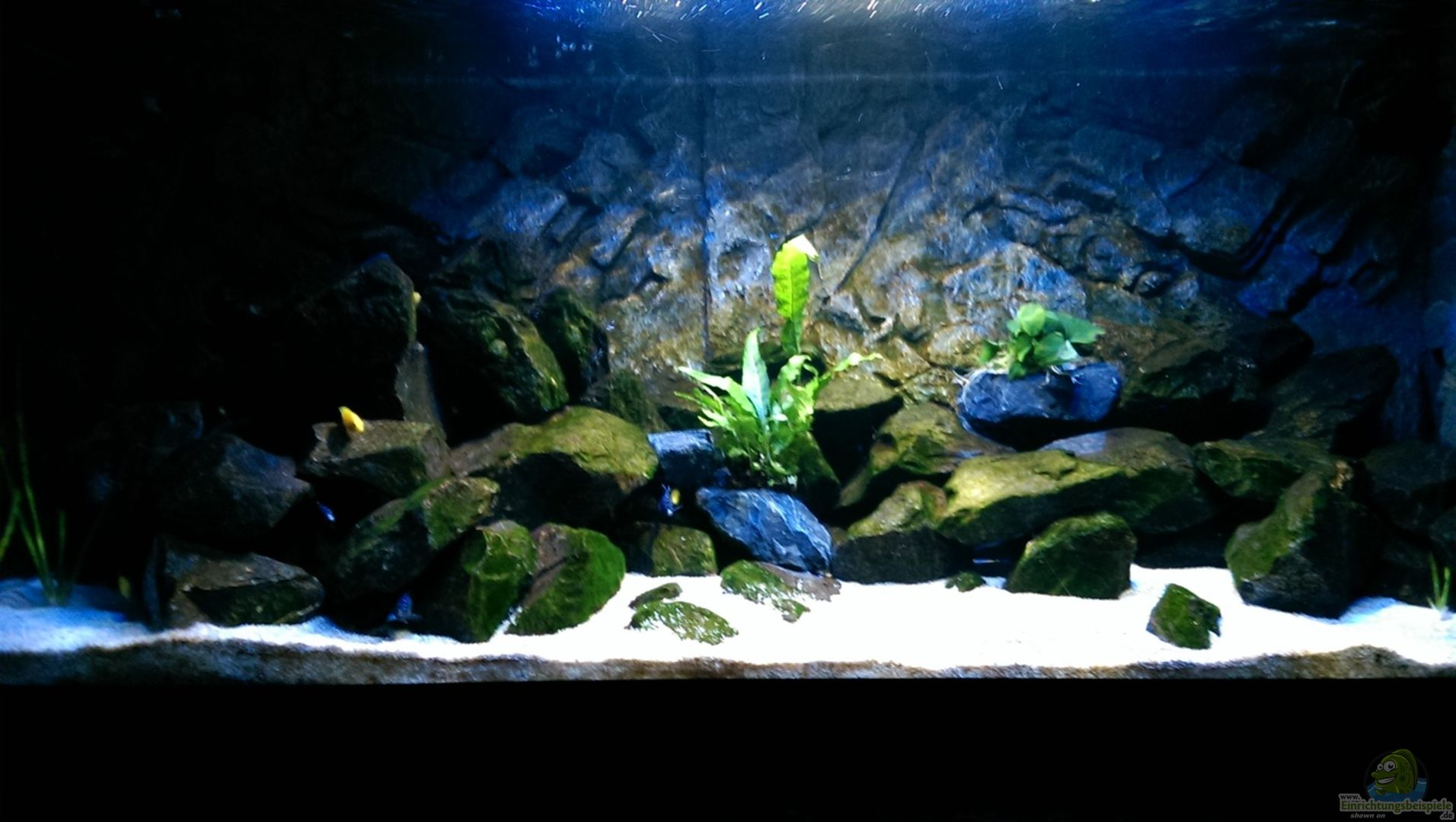 Aquarium von christoph moser becken 32905 for Aquarium 120x40x50