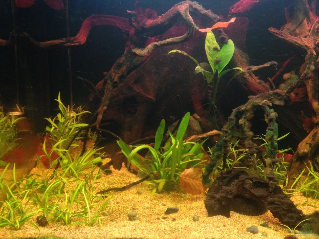 aquarium amazonas aus amazonas von l tzkopf. Black Bedroom Furniture Sets. Home Design Ideas