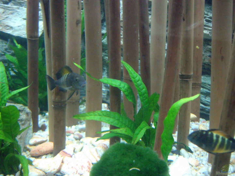 Aquarium Von Rene Wiedemann Becken 3298