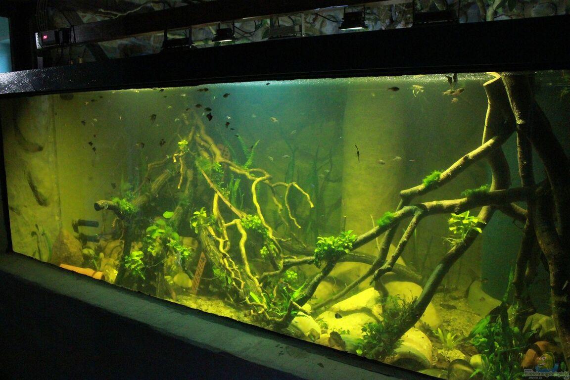 aquarium von kurt osterhoff. Black Bedroom Furniture Sets. Home Design Ideas