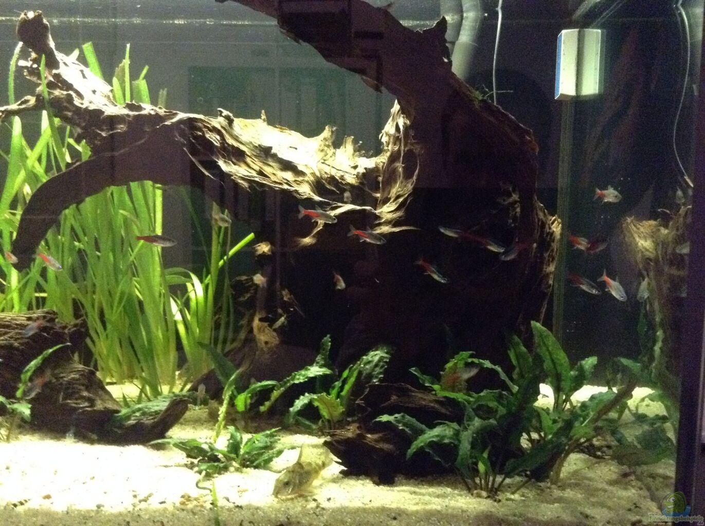 Aquarium von simon w wurzel biotop ohne heizung for Aquarium wurzel