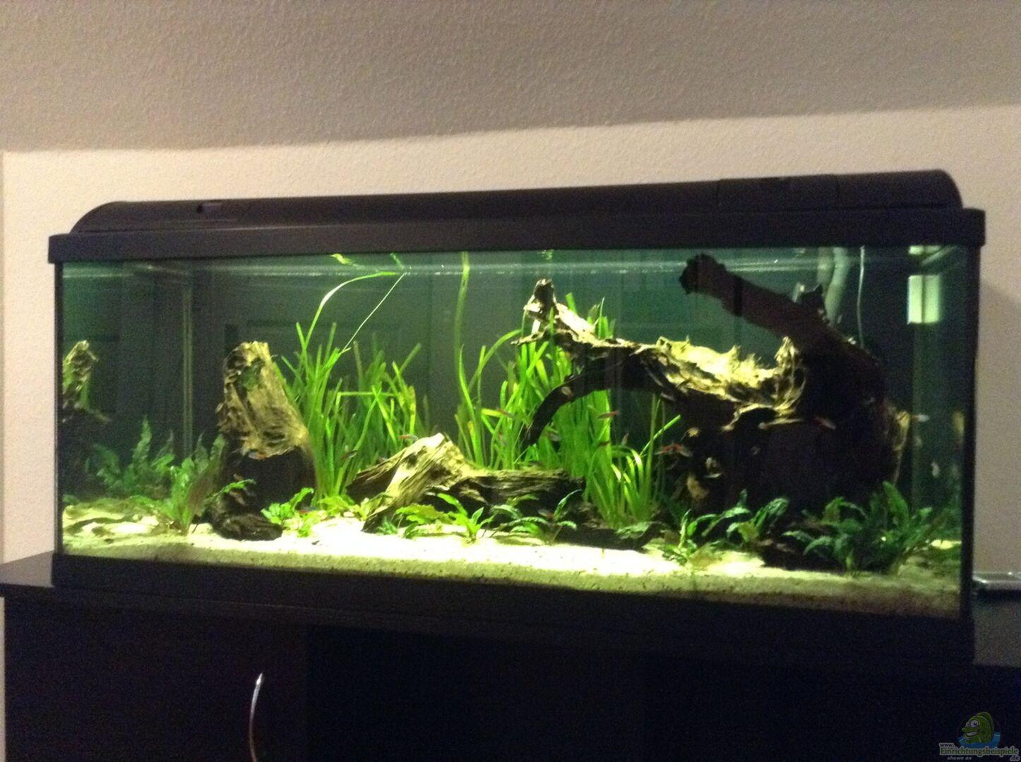 Simon w 33022 wurzel biotop ohne heizung for Waterhome aquarium