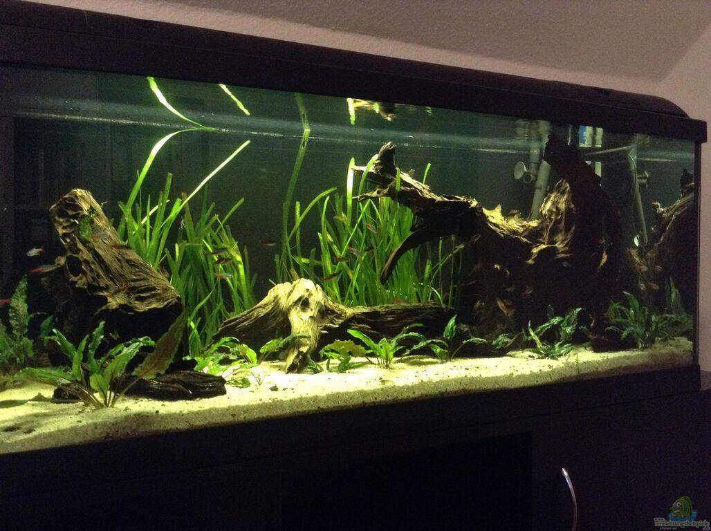 Aquarium von simon w wurzel biotop ohne heizung for Aquarium heizung
