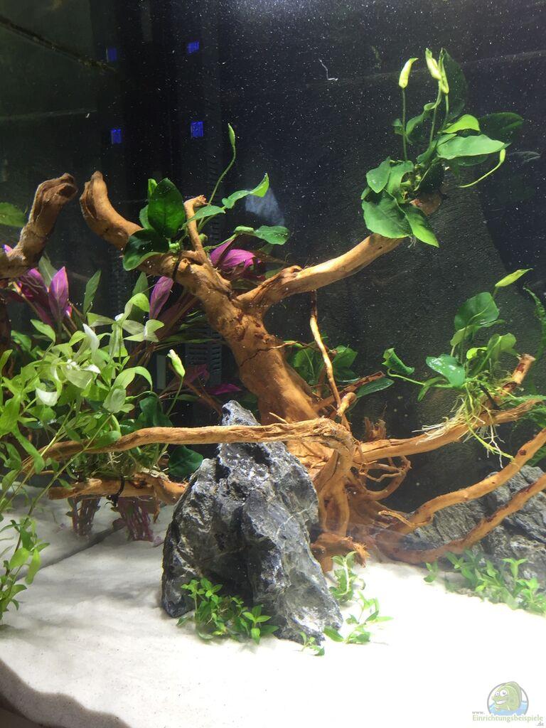 aquarium von rocknar becken 33060. Black Bedroom Furniture Sets. Home Design Ideas