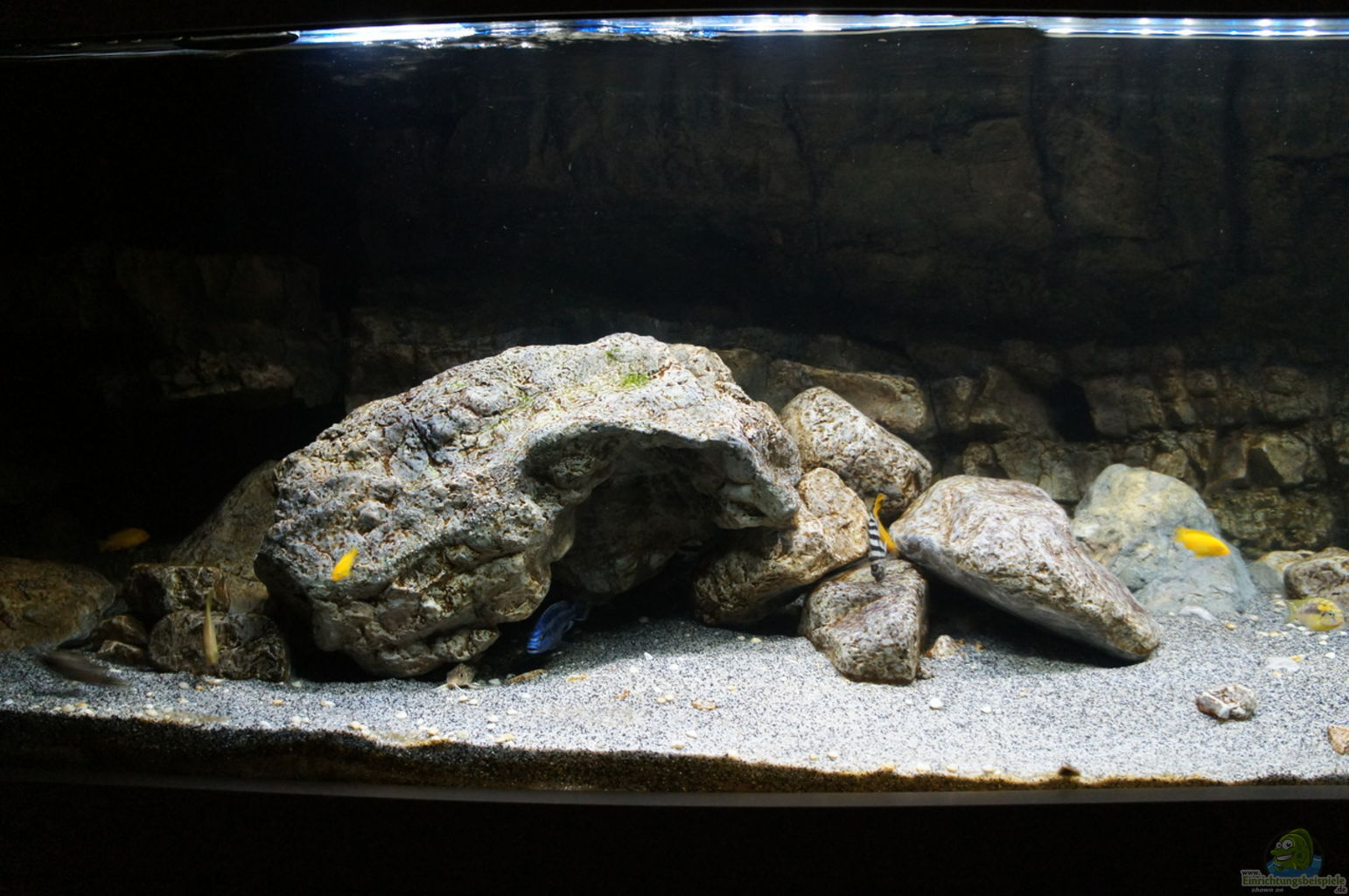 Aquarium Deko Selber Machen | Swalif