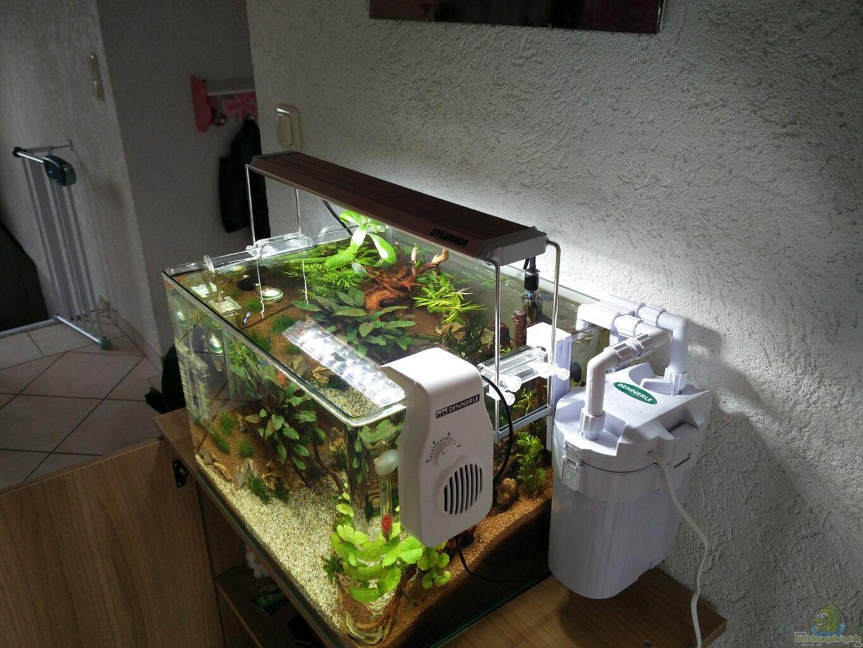 aquarium von solvin m rchenwald. Black Bedroom Furniture Sets. Home Design Ideas
