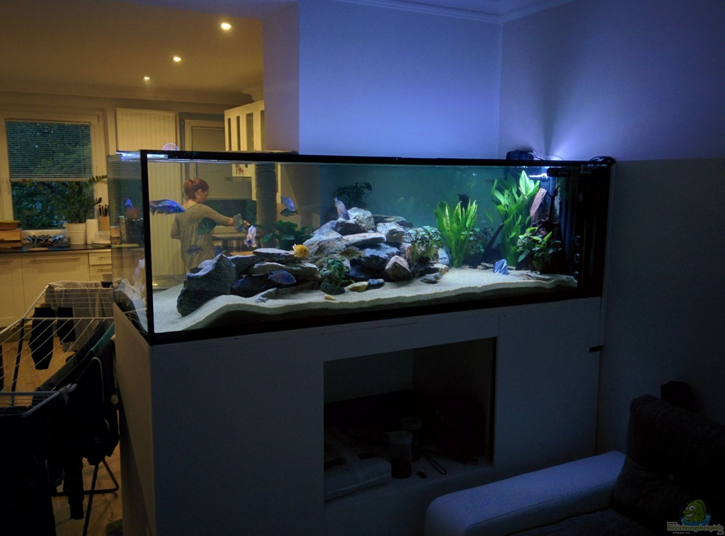 aquarium hauptansicht raumteiler zwischen wohnzimmer k che aus malawitraum von matthias puffer. Black Bedroom Furniture Sets. Home Design Ideas