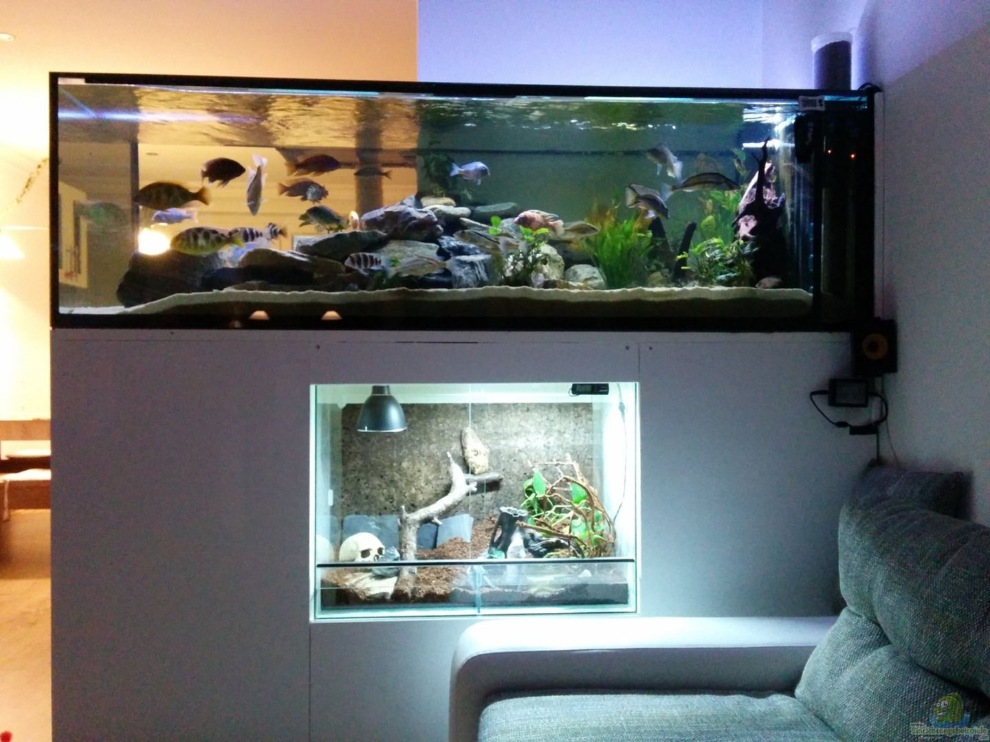 aquarium raumteiler mit terrarium im unterbau aus. Black Bedroom Furniture Sets. Home Design Ideas