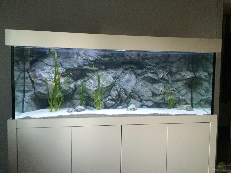 Aquarium von senker 33098 wohnzimmer becken - Aquarium wohnzimmer ...