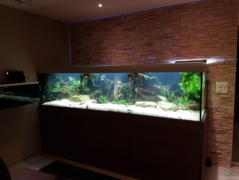 aquarium von metaphor 33116 s damerika amazonas. Black Bedroom Furniture Sets. Home Design Ideas