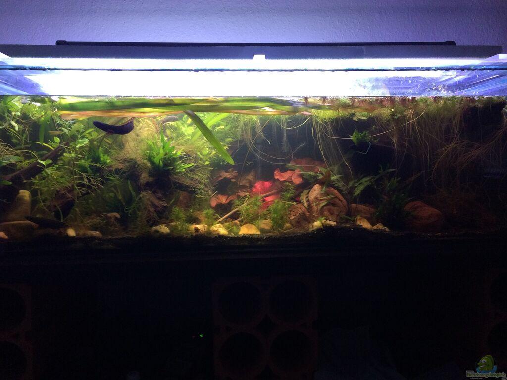 aquarium von kalk reinigen wasserhahn entkalken perlator und sieb innen sauber. Black Bedroom Furniture Sets. Home Design Ideas