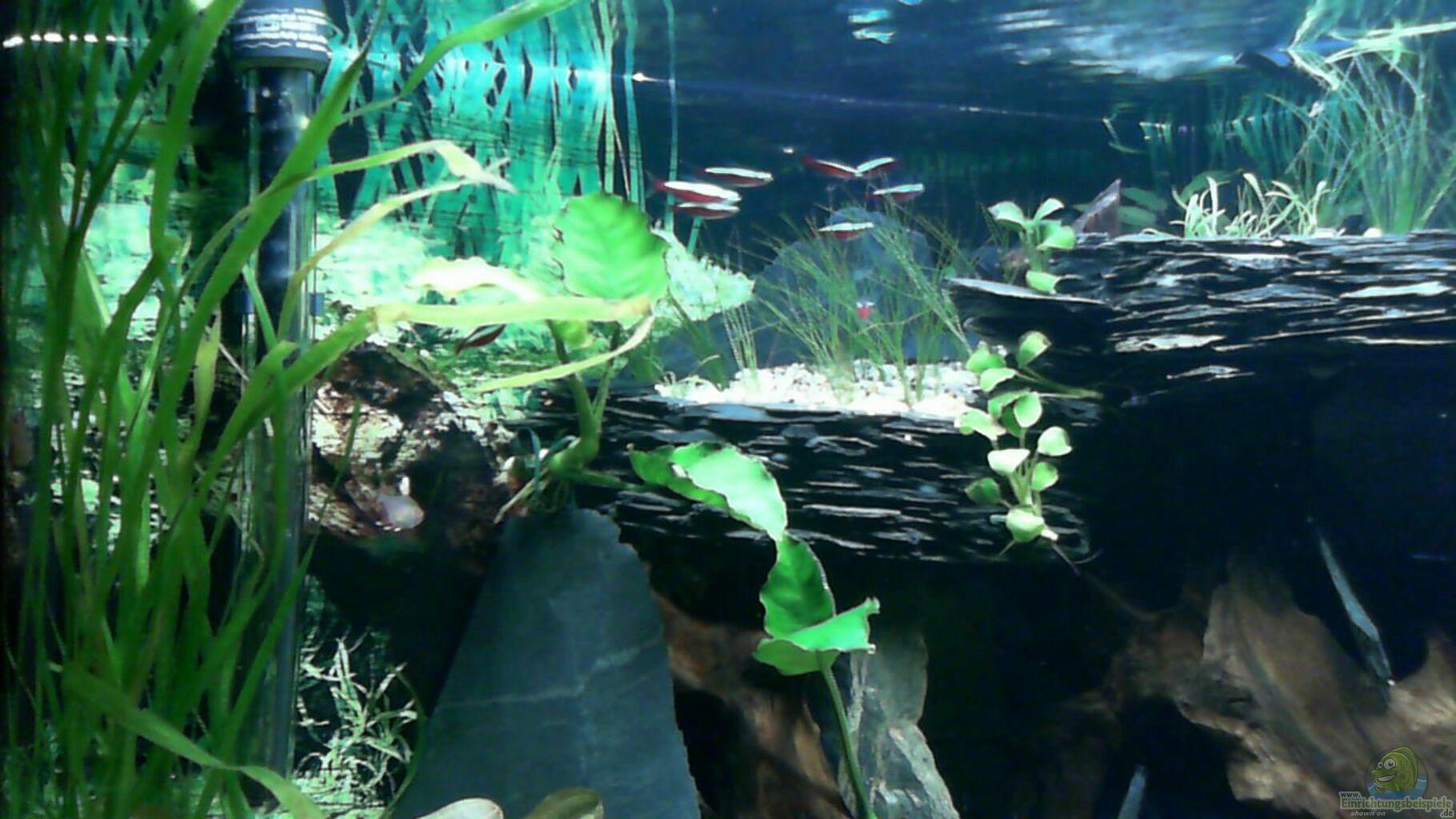 Aquarium von dieter pr becken 33140 geselschaftsbecken for Skalar futter
