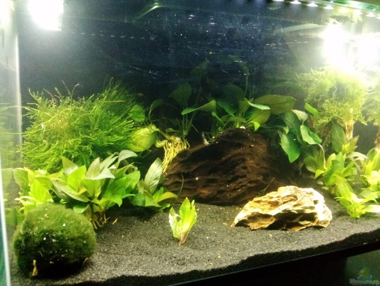 aquarium von fischfl sterer mein erstes nano. Black Bedroom Furniture Sets. Home Design Ideas
