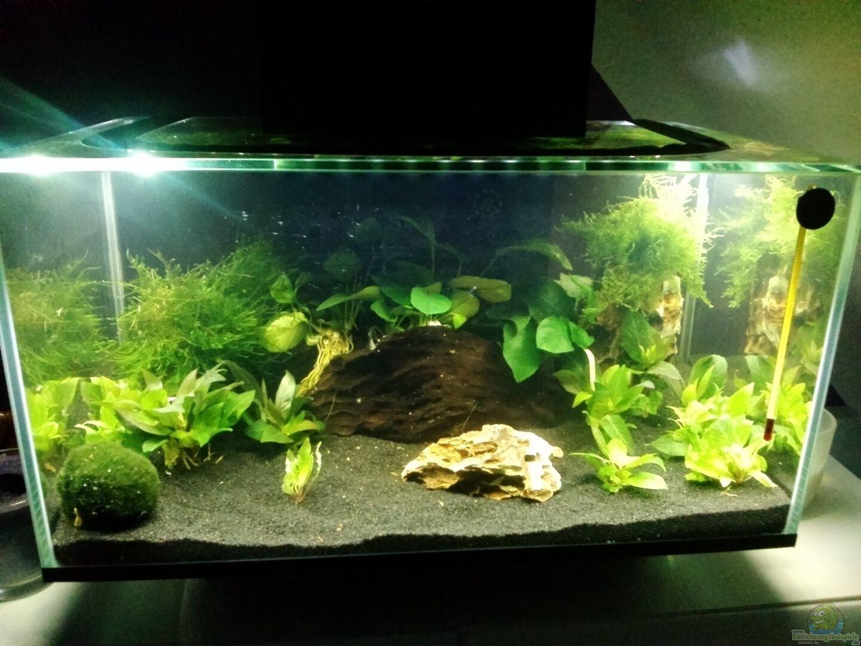 Aquarium von fischfl sterer 33143 mein erstes nano for Mein aquarium