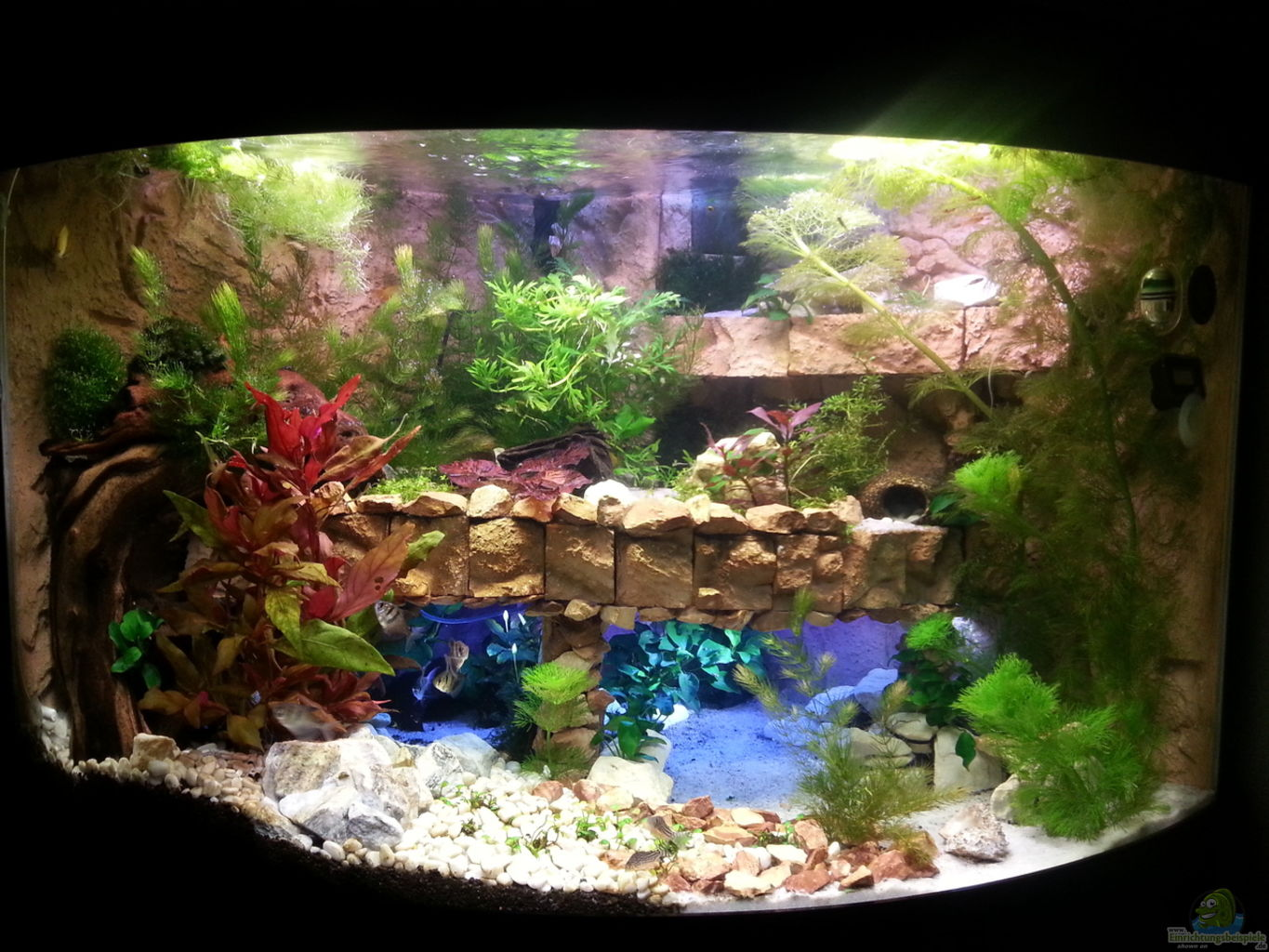 Aquarium von bluemoon juwel trigon 190 for Aquarium juwel