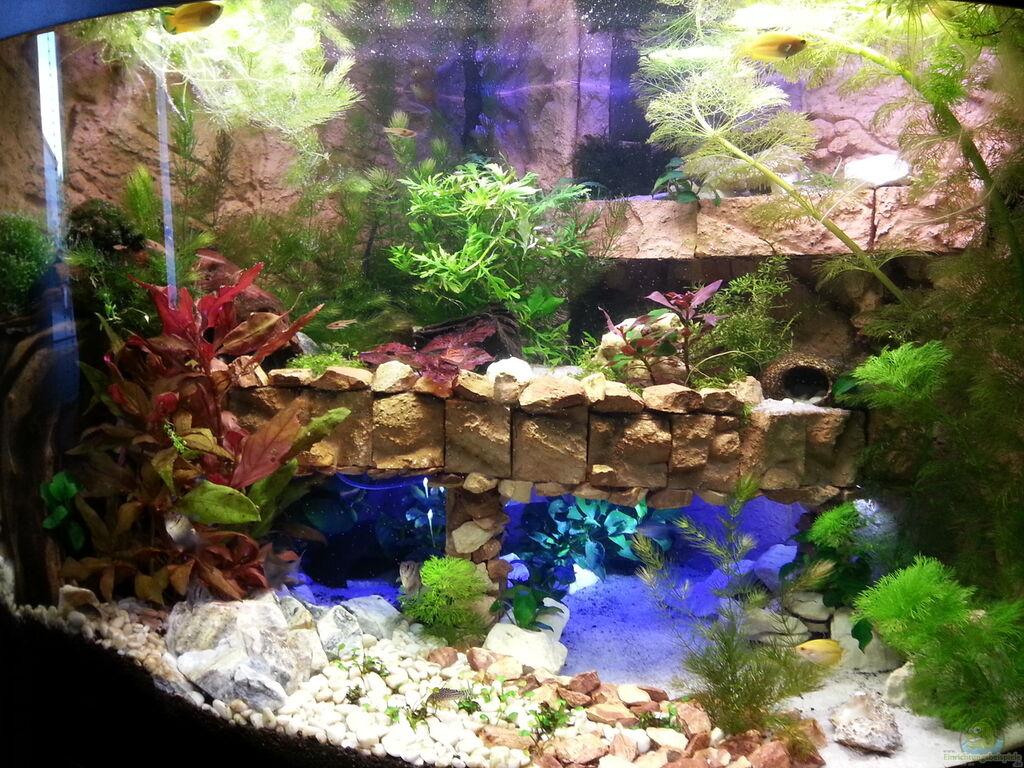 aquarium von bluemoon juwel trigon 190. Black Bedroom Furniture Sets. Home Design Ideas