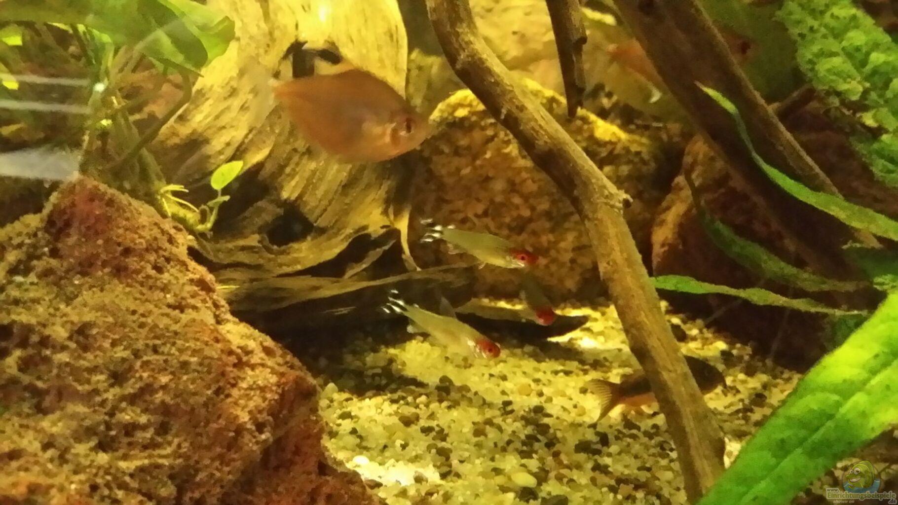 Aquarium von micha zoschke becken 33203 for Skalar futter