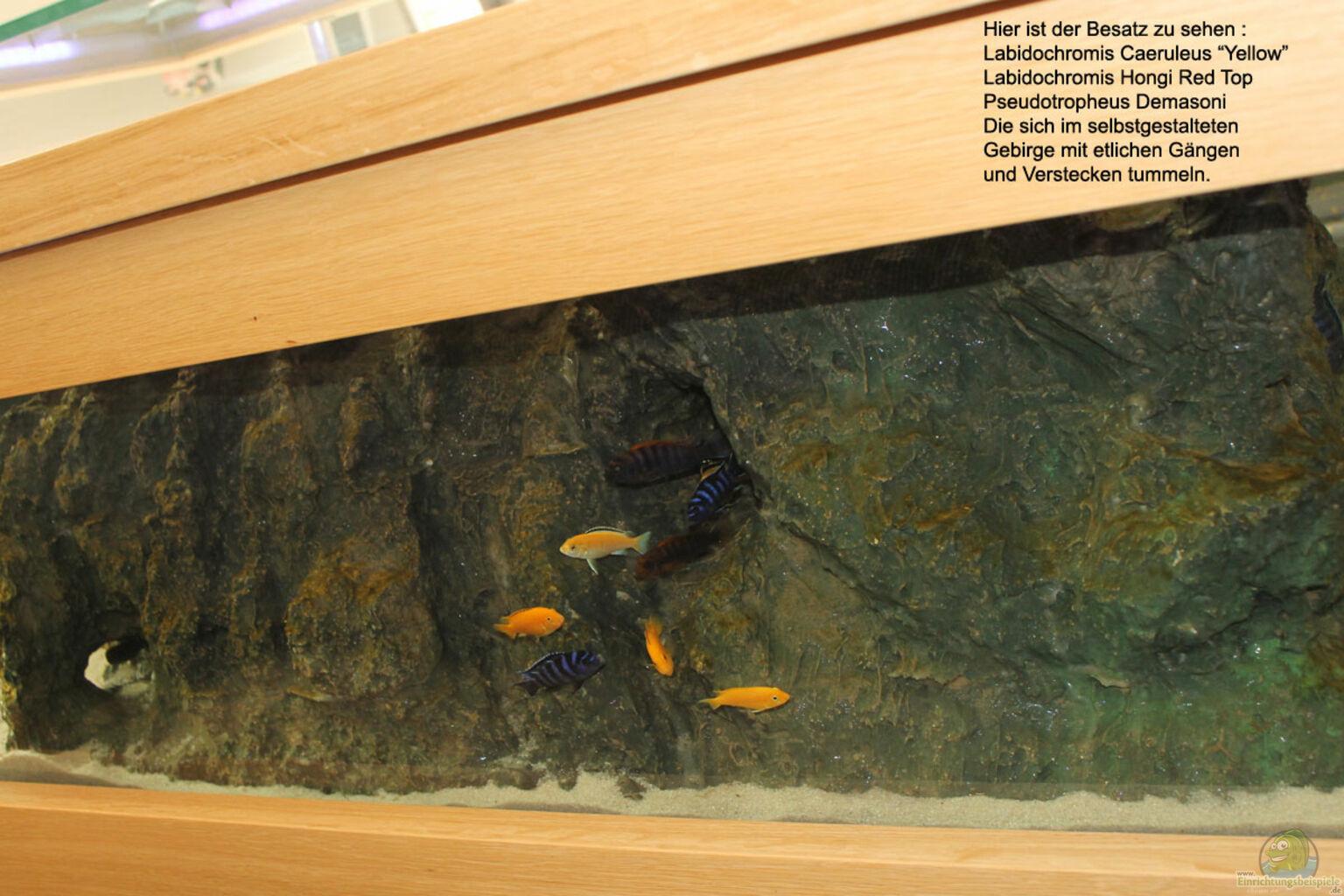 aquarium von florian b hling couchtisch aquarium. Black Bedroom Furniture Sets. Home Design Ideas