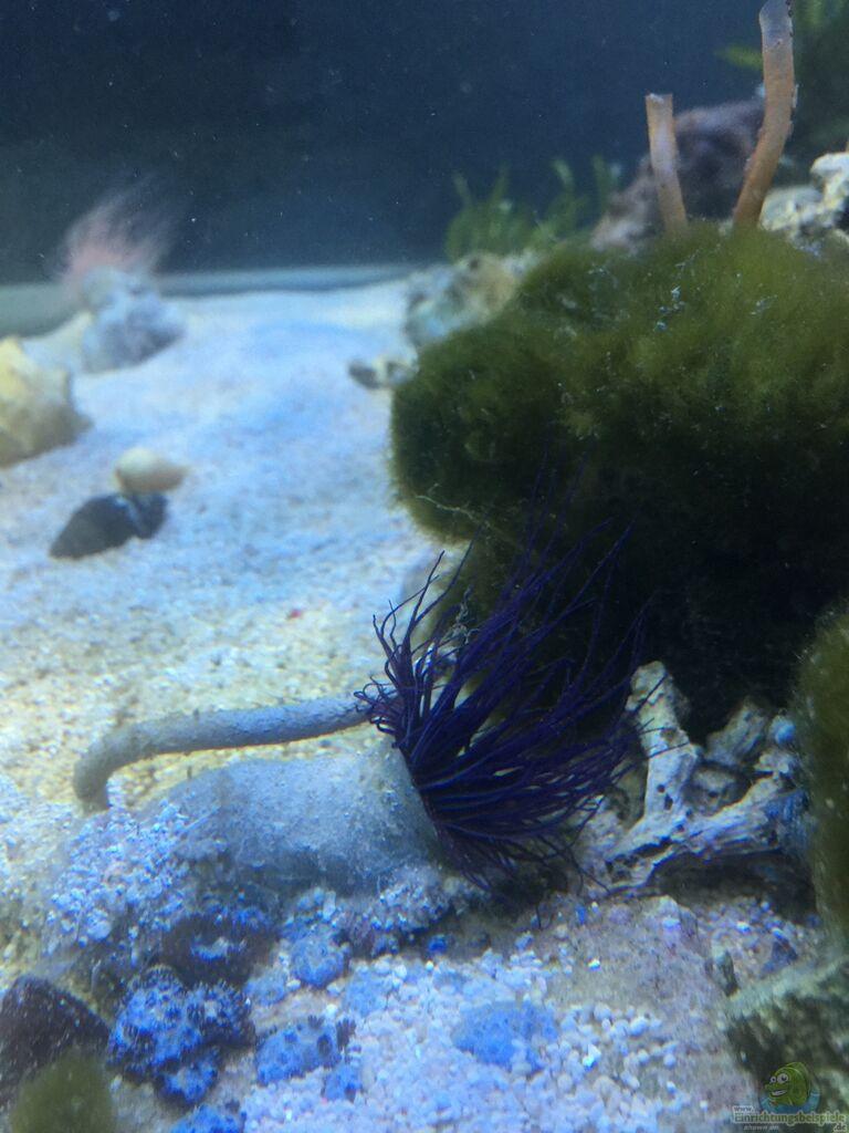 aquarium meerwasser kosten aquarium von peter tippmar meerwasser die zweite aquarium von peter. Black Bedroom Furniture Sets. Home Design Ideas