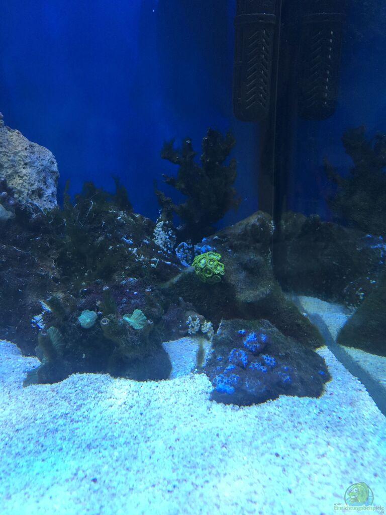 aquarium von peter tippmar meerwasser die zweite. Black Bedroom Furniture Sets. Home Design Ideas