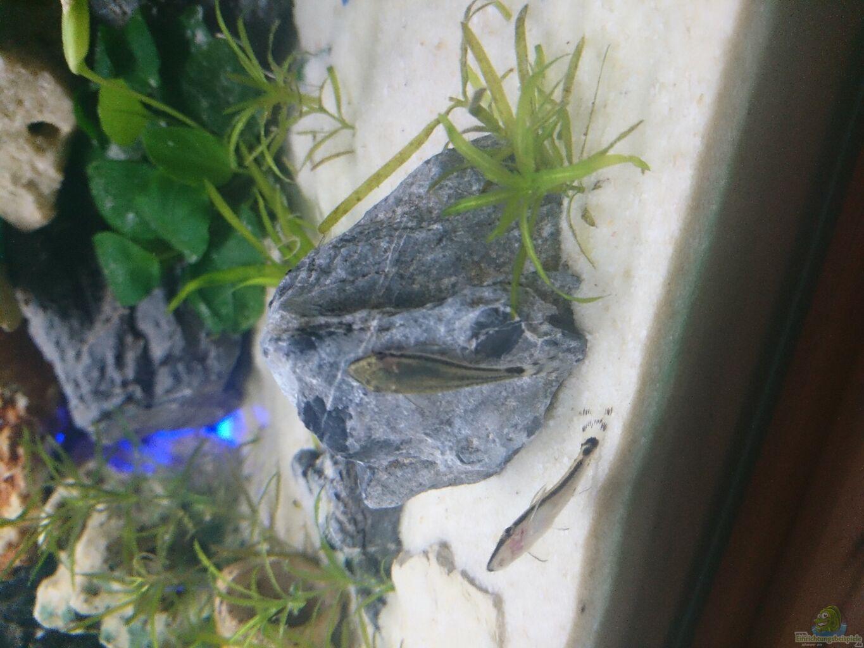 aquarium spiel