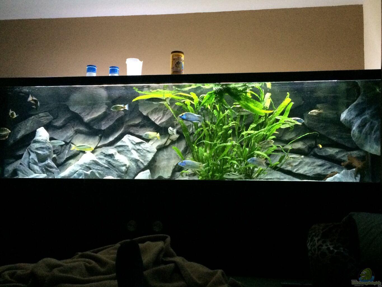 Aquarium von matze0815 becken 33264 for Aquarium becken