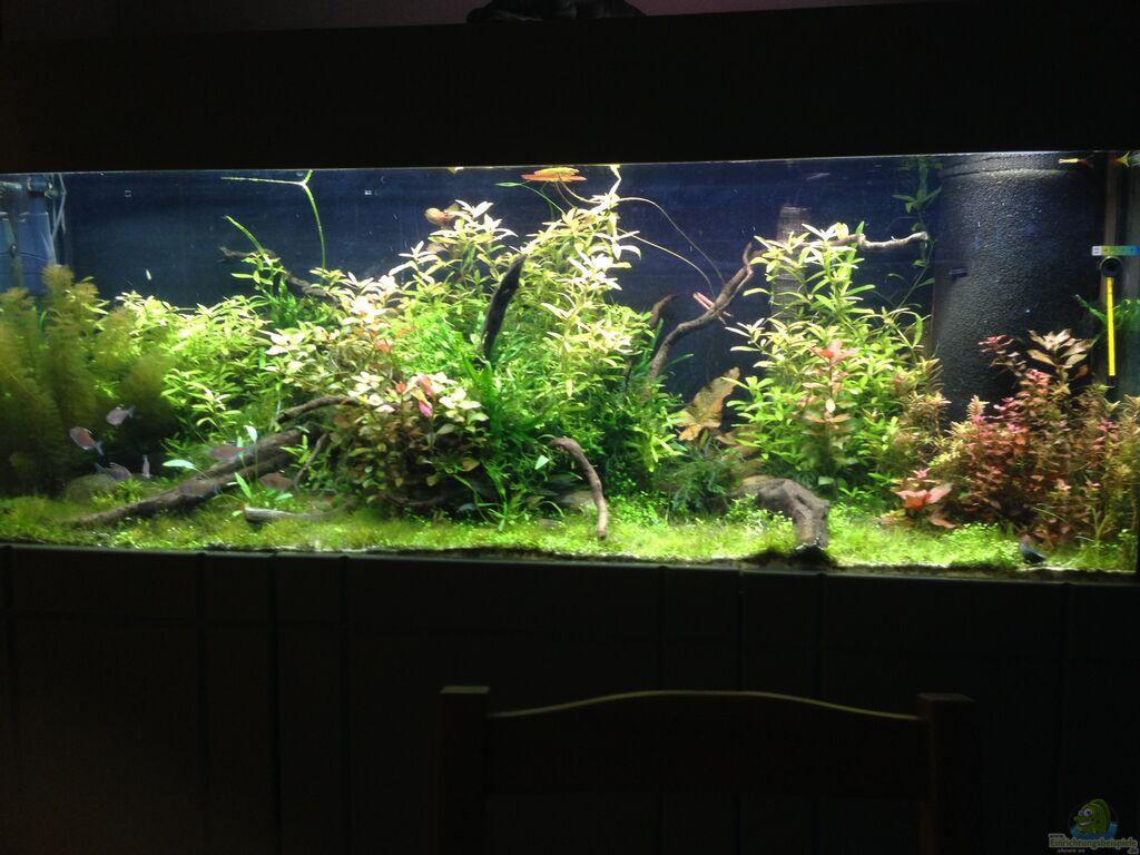 Aquarium von dominik wexenberger becken 33273 for Aquarium becken