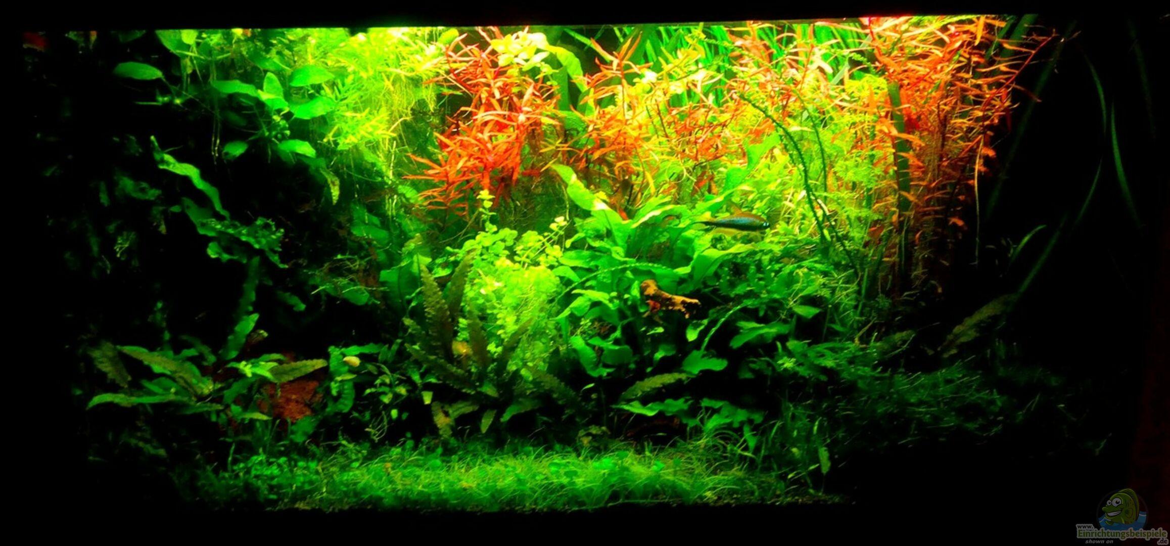aquarium von scaper 33277 dschungellichtung. Black Bedroom Furniture Sets. Home Design Ideas