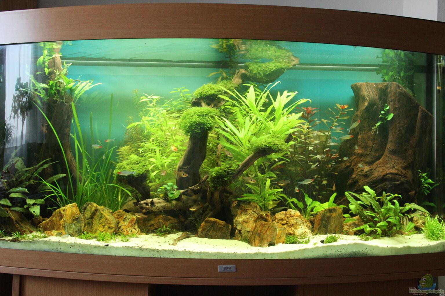 aquarium von julian t amazonas urwald panorama 260l. Black Bedroom Furniture Sets. Home Design Ideas