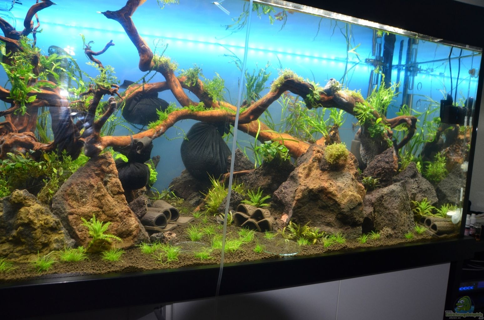 aquarium von gallius wilder rheinwald. Black Bedroom Furniture Sets. Home Design Ideas